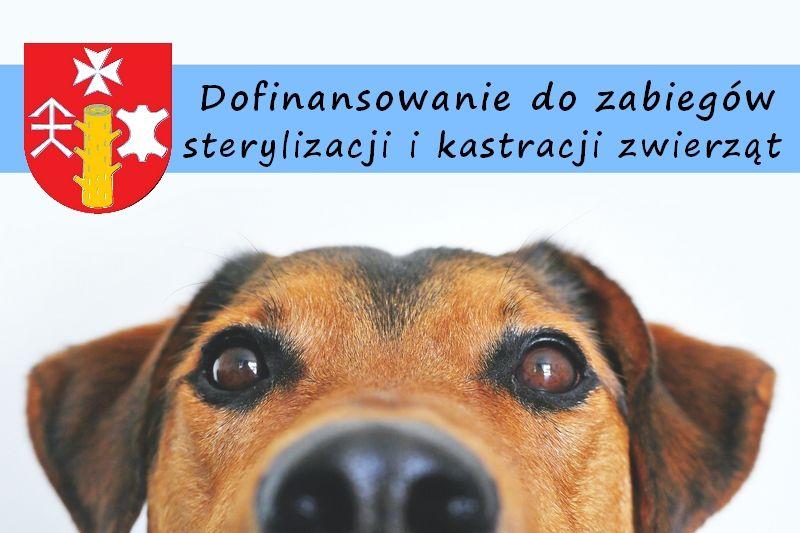 Dofinansowanie do zabiegów sterylizacji i kastracji zwierząt